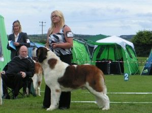 Irish , International Champion Fandango Van't hof Ter Quinni of Eminence (ANCH 08&09, EW09)