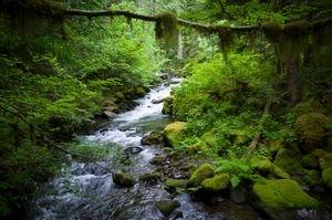 A Natural Landscape