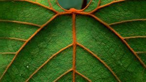 rainforests rock for leaves