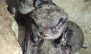 a small group of bats