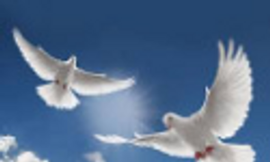 doves of love for events