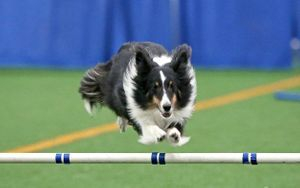 Raider doing agility.
