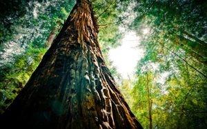 habitat destruction from palm oil