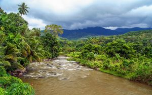 rainforests rock for rivers