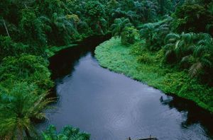 rainforests for all