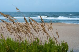 calming sea views and sea oats