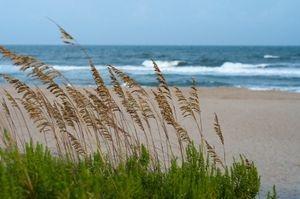 calming sea views and sea oats