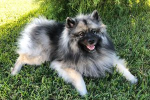 Rumi, 2 yr old female from Spirit and Unkas