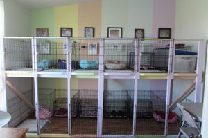 The Pomeranian Dog Room