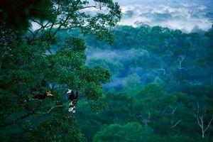 palm oil free for mangroves