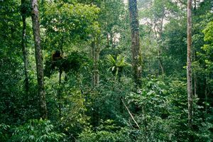 rainforests for trees