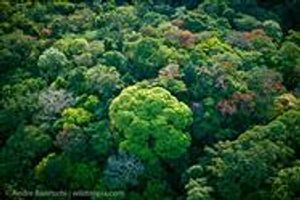 palm oil free for trees