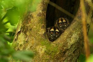 1,000's of species live in rainforests