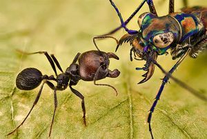 palm oil free for fire ants