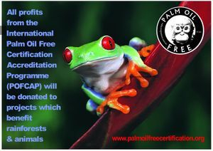 rainforests for frogs