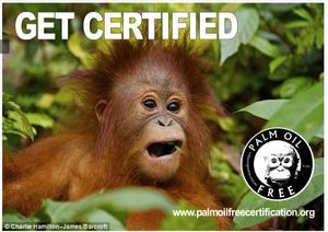 palm oil free for future