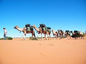 Camel Expedition Trekking Training Course, Flinders Ranges, South Australia. Outback Australian Camels, Australia's Premier Camel Safaris
