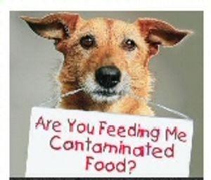Life's Abundance Holistic Dog Food