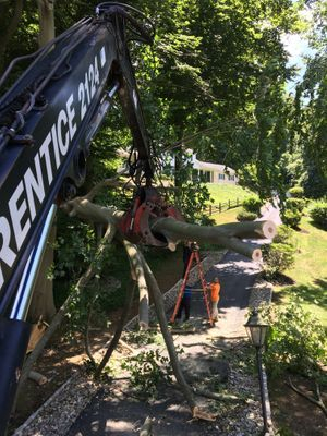 Tree Guys picking up logs after a removal job located in West Chester PA.