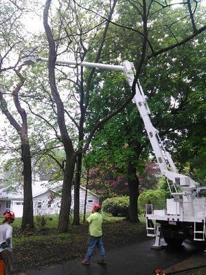 Tree Guys pruning a tree with their Bucket Truck in West Chester, Pa