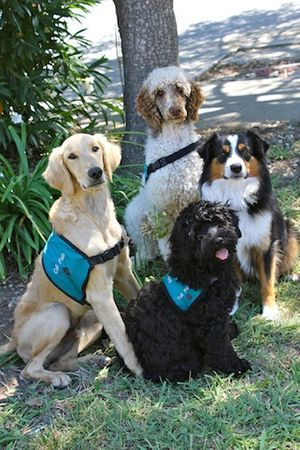 Our Service Dogs.