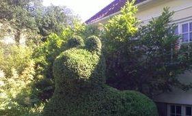 trädgårdshjälp, häck, fastighetsservice