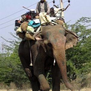 "src=""australian womens travel.jpg alt=womens tours,elephant on road, rajasthan , India"