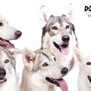 Darryl white Photography-Dogigami