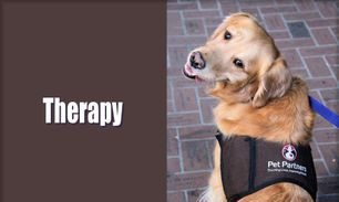 Button - Animal Assisted Therapy