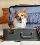 dog, hotel, traveler's safety, pets in Greece