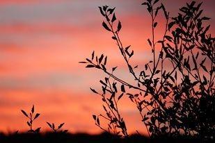 billing services, Spokane, WA sunset K. Henry