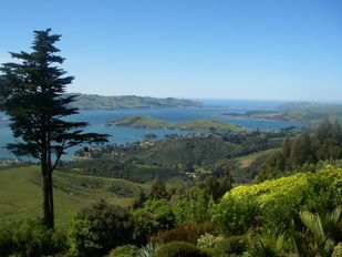 Otago Peninsula South Island New Zealand