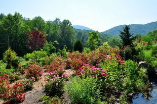 Native plants used in landscaping in North Carolina