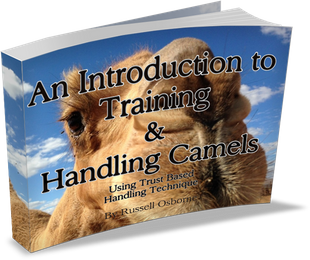 Outback Australian Camels Camel Training Information