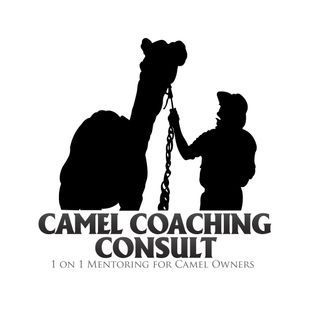 Camel Training Cameleer Training Coaching Consult