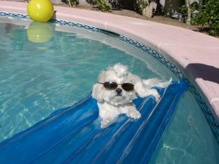 Pets relaxing in pools