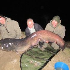 catfishing river Ebro wels catfish fishing spain