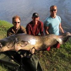 200lb wels catfish guided boat catfishing river ebro