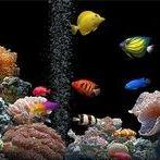 Distilled Water use in aquariums