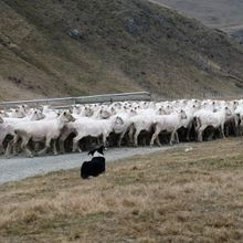 New Zealand South Island Private Tour