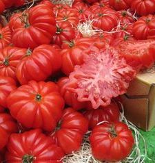 "src=""australian womens travel.jpg alt=womens travel,tomatoes at the market , paris france """