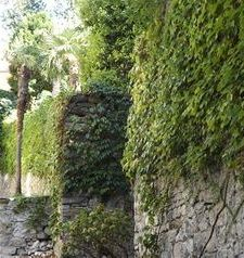 "ravel vine covered walls, varenna, lake como, italy"">"