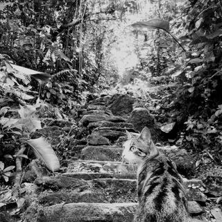 Lost City gatto