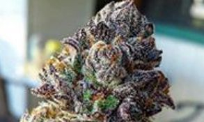 Strain Name: Black Widow  Grade: A
