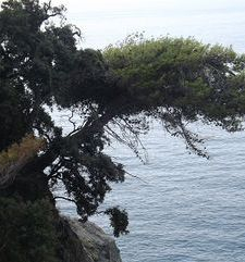 "ours.jpg alt=womens travel,view on walking path, cinque terre, italy"">"