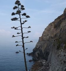 "ours.jpg alt=womens travel, lone tree, cinque terre, italy"">"
