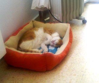En lugna katt i sitt  hem.