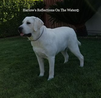 Harlow's Reflections On The Water