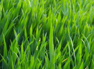 You deserve to have a clean cut lawn