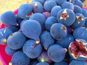 figs for summer , it's Greece's Paradise